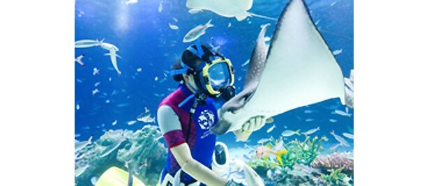 ダイバーたちによる水中パフォーマンスも1日に7回実施される