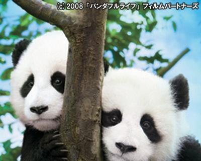 一時期は1000頭足らずにまで減ったパンダも、保護区設置の成果により1600頭まで回復