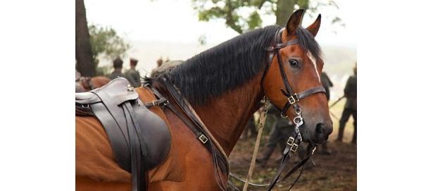犬ばかり注目を集めているが、『戦火の馬』の馬も負けてはいない