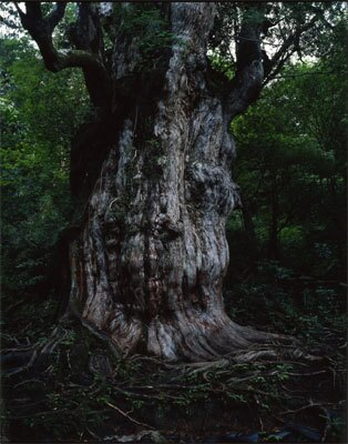 自然遺産編「屋久島」(C)Takeshi Mizukoshi