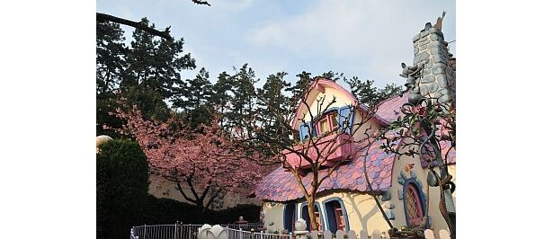 """「ミニーの家」の裏庭では、まもなく""""日本一早い桜""""として有名な河津桜が開花"""