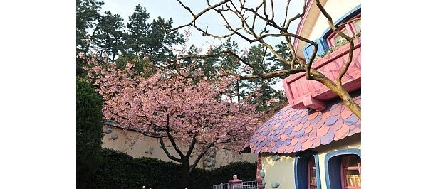 桜とミニーの家と一緒に撮影すればメルヘンな一枚が出来上がり!