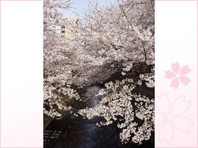 1位の目黒川桜並木は周辺のブティックや雑貨店巡りも楽しめる女性に人気のスポット