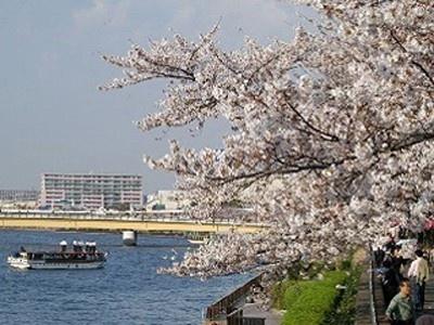 4位の墨田区立隅田公園は完成したばかりの東京スカイツリーと桜のコラボレーションが見どころ