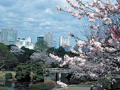 6位の新宿御苑は58.3haの苑内にカンザクラ、枝垂れ桜、ソメイヨシノ、山桜など約65種、約1300本の桜が!