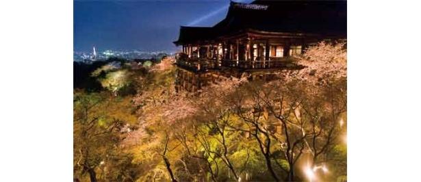 ライトアップした京都の清水寺。桜と慈悲の光のコラボは見事!