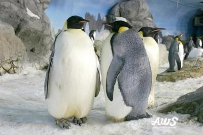 よちよち歩くペンギンの行進や、お食事風景をパーク内で見ることができる