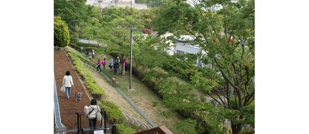 緑豊かな広々ドッグラン「ワンコパーク」