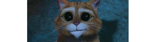 【写真】ウルウル瞳で相手に同情を訴えるプス。これにはみんなメロメロ!?