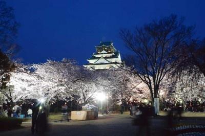 美しく咲く春の桜は今だけしか観られない!写真は大阪城公園