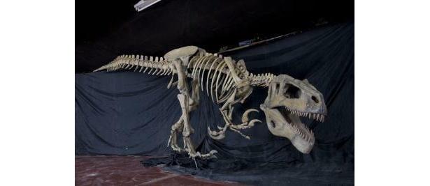 動き出しそう!?ハンター恐竜メガラプトル