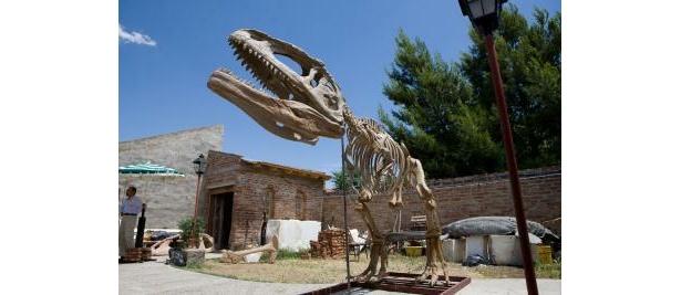 大迫力!!マプサウルスは初公開で超貴重!