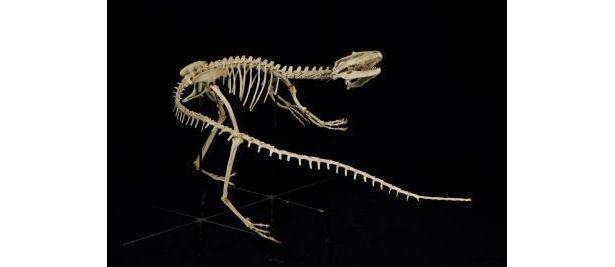 サンタナラプトルは全長2m以下の小型肉食恐竜