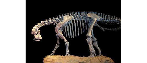500本以上の歯を持つニジェールサウルス