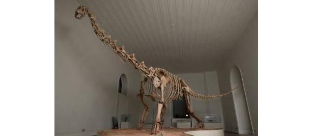 マシャカリサウルスは、ブラジルで初めて復元