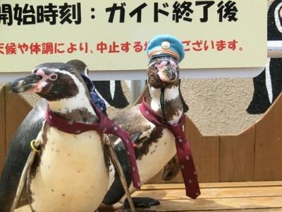【画像】かわいい3羽の 「ペンギン駅長」画像はコチラ