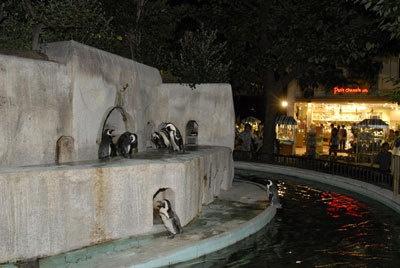 夜のペンギンは寝てる? 起きてる?