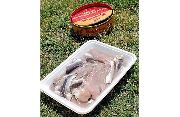 激クサ食品の正体はニシンの塩漬けを缶の中で醗酵させたもの