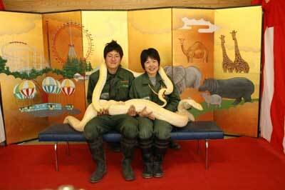 膝の上に大迫力のニシキヘビ!あなたはできる?