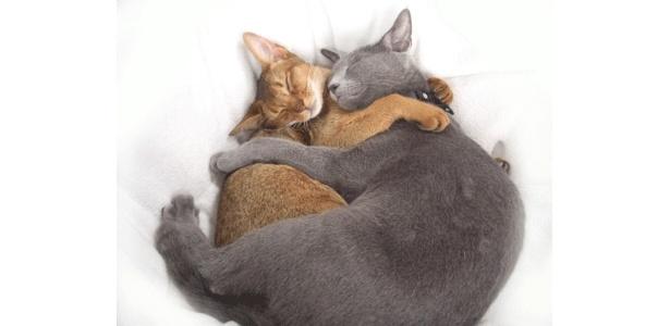満員御礼を夢見るカイくん(左・アビシニアン・9ヶ月)とココちゃん(右・ロシアンブルー・9ヶ月)でした