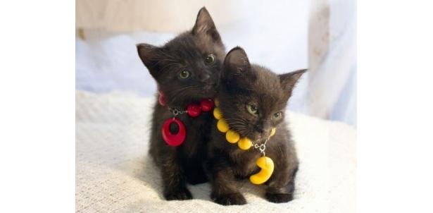 猫好きにはたまらない、猫の愛らしい姿が見られる『くろねこルーシー』