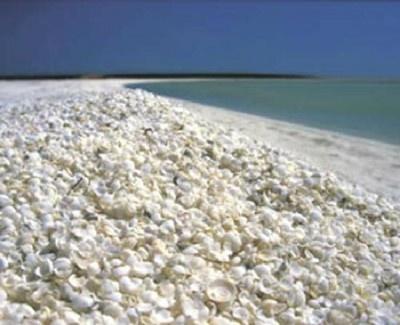 大小様々な貝殻が埋まった西オーストラリアの「シェルビーチ」
