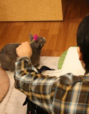店内では猫じゃらしやおもちゃなどで一緒に遊べる(にゃんころ)