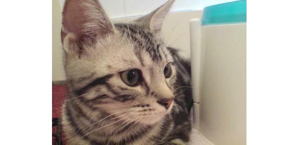 何を考えているか分からないのもネコの魅力の1つ(コッコラーレ)