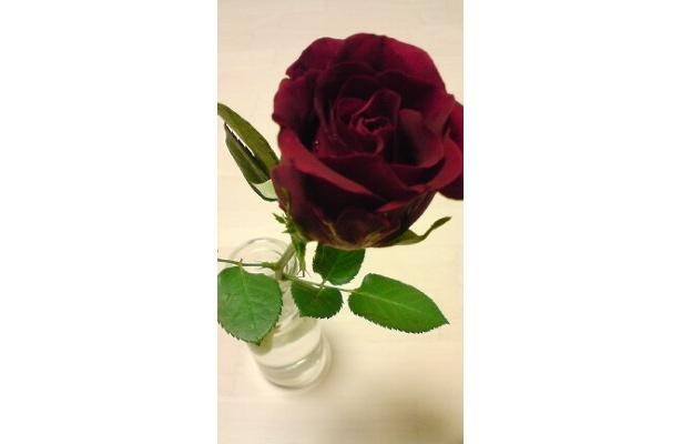 バラは一輪¥200。ミニ花束¥600など、いろいろ種類ありでした