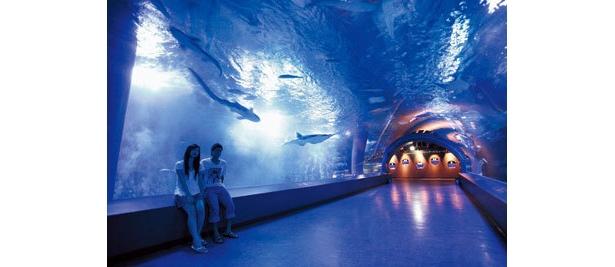 海中トンネルは青い静寂の世界(エプソン品川アクアスタジアム)