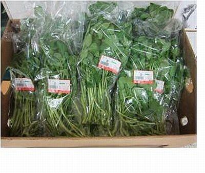 【写真を見る】その他の売れ筋野菜と商品詳細はコチラ