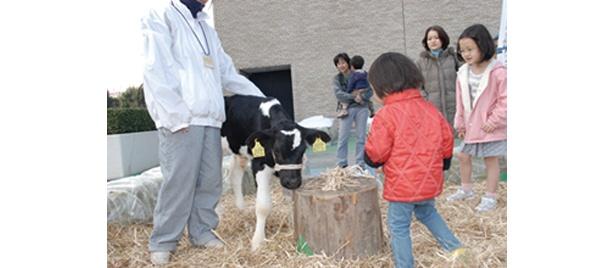 「ふるさと体験広場」では、農業体験にチャレンジ!?