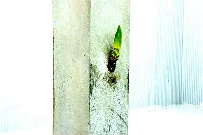 コンクリートから球根が芽吹いていく生命力を表現