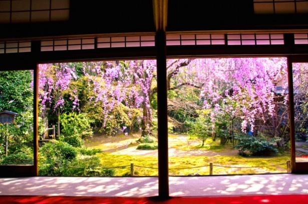 食事会場「大休庵」。室内からも美しいしだれ桜が楽しめる