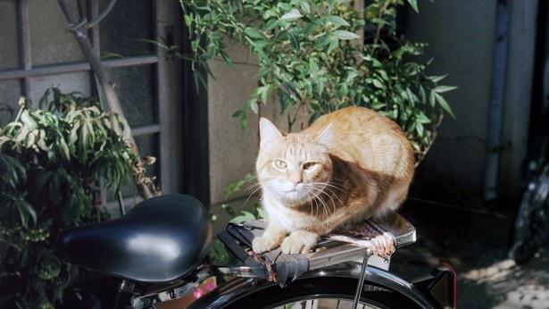 自転車の荷台で日なたぼっこをしていたネコ