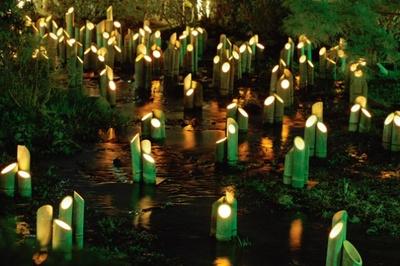 円山公園内を流れている吉水のせせらぎ一面が約500本の青竹の登録で満たされる