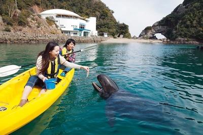 「太地町立くじらの博物館」で飼育されているクジラやイルカとのふれあい体験、ショーなどは引き続き楽しむことができる
