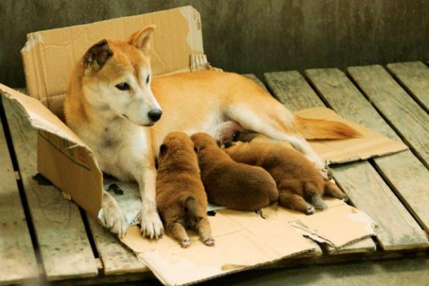 母犬と子犬の親子の絆にも感動!