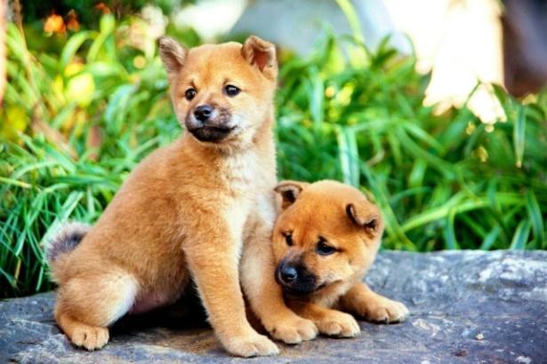 【写真を見る】子犬の愛らしさも必見!