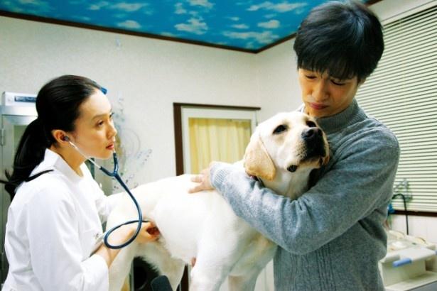 『ひまわりと子犬の7日間』は3月16日(土)より公開