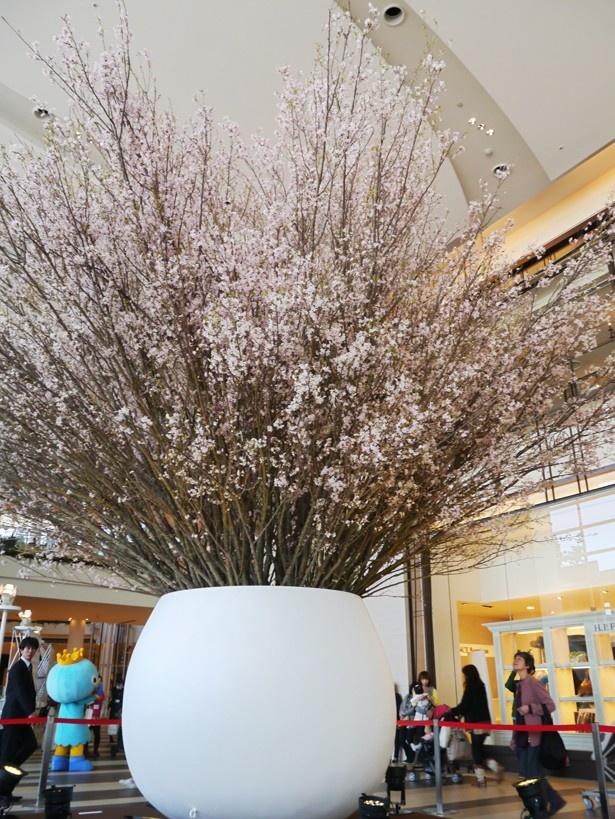 阪急西宮ガーデンズの2階メインントランスに登場する3/26(火)まで(予定)観ることができる