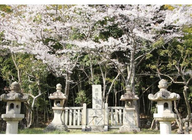 「お花見ウォーク」&はびきの「軽トラ市」IN通法寺跡(羽曳野市)