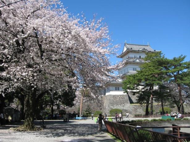 日本さくら名所100選の小田原城址公園
