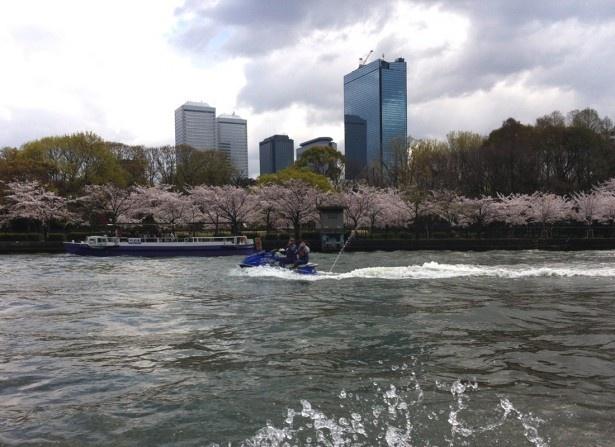 マリンジェットに乗って大阪お花見クルージング!
