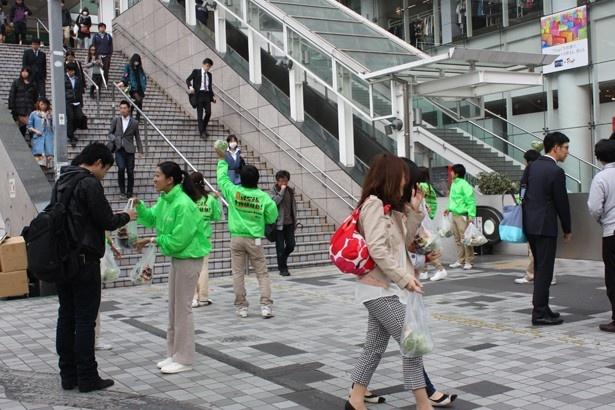 3/29にはJR新宿駅の街頭でサンプリングを実施!「はなまる」にちなんで870個のレタスがサンプリングされた。