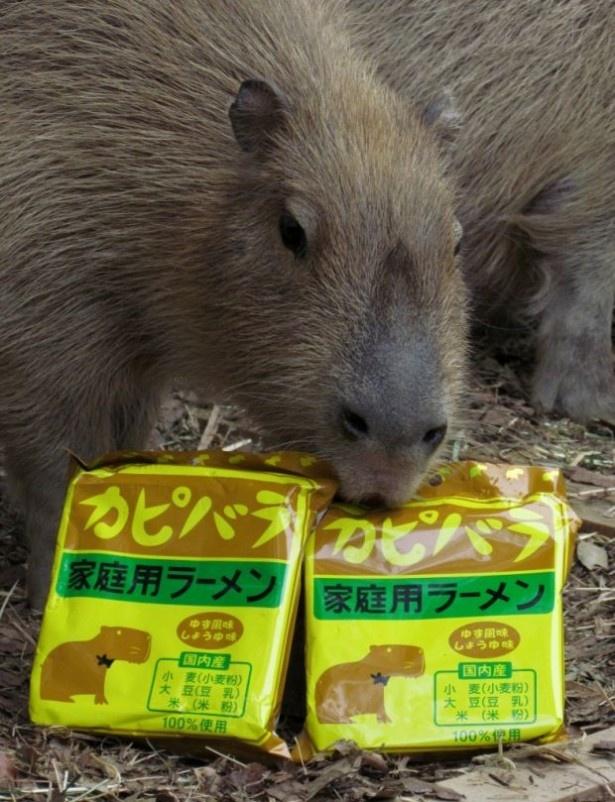 4月27日(土)より発売される袋麺「カピバララーメン(ゆず風味しょうゆ味)」(200円)