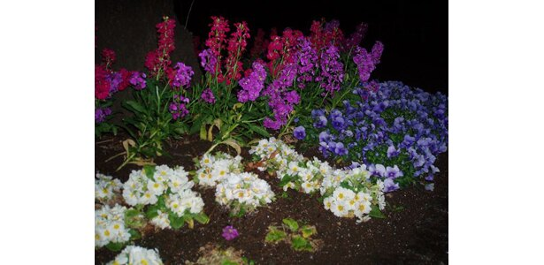 植え込みには季節の花々が。大都会でも季節を感じながら走れるんです