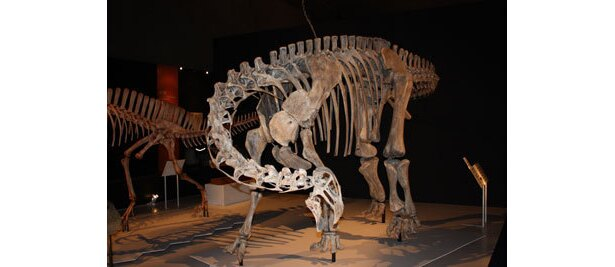 10.5mと小柄な竜脚類ニジェールサウルス