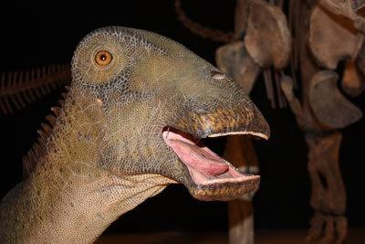 歯が特徴的なニジェールサウルスのビジュアル