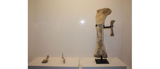 それでもデカイ、ニジェールサウルスの大たい骨と頚椎・胴椎